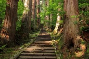 羽黒山参道杉並木
